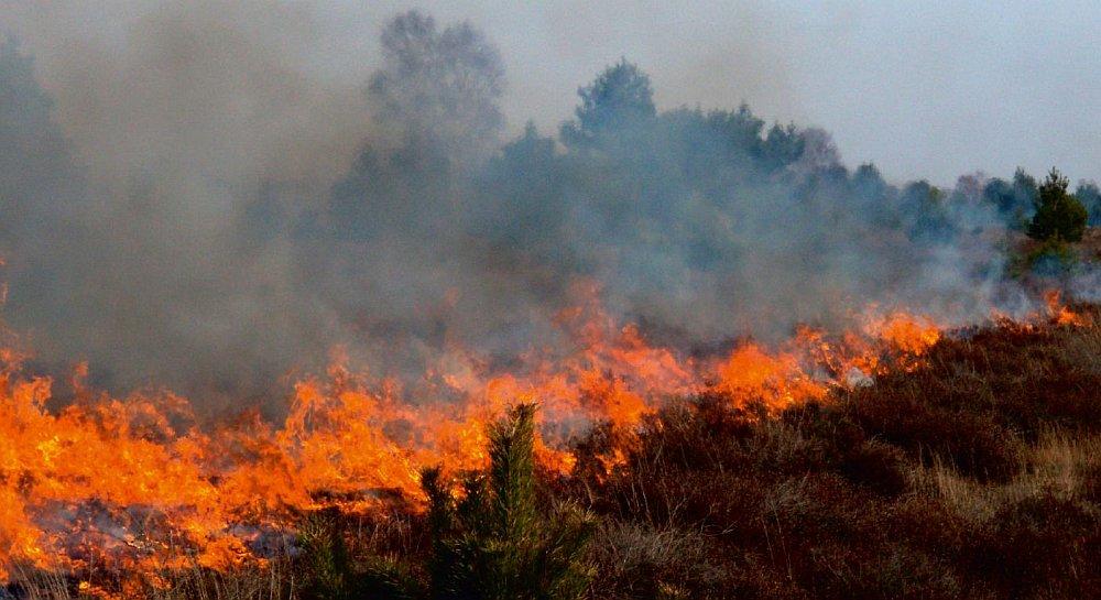 Kontrollierter Einsatz von Feuer zur Landschaftspflege