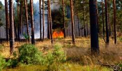 Waldbrandbekaempfung in munitionsbelastetem Gelaende